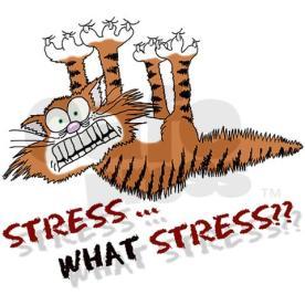 stress_cat_tile_coaster
